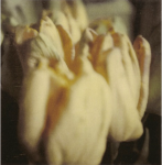 Foto | CyTwombly